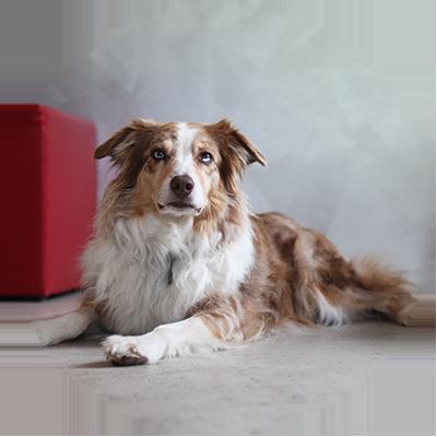 Chilli, Agenturhund, just GmbH audiovisuelle produktionen